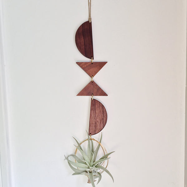 Modern Air Plant Wall Hanging - Tobi