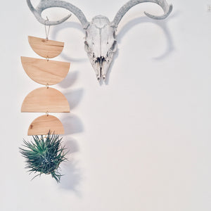 Air Plant Wall Jewelry no.021