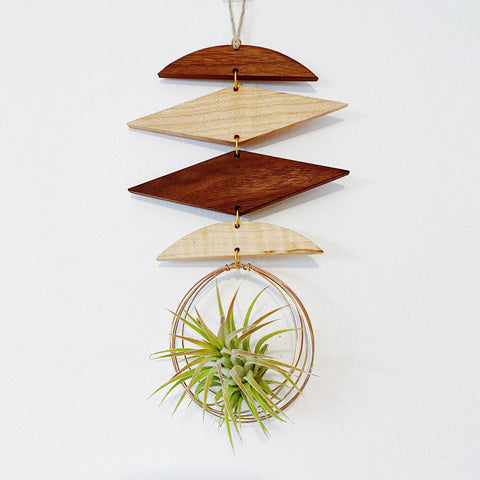 Air Plant Wall Jewelry no.014