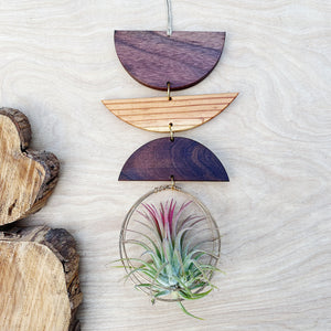 Air Plant Wall Jewelry no.006