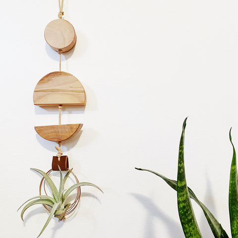 Modern Air Plant Wall Hanging no.43