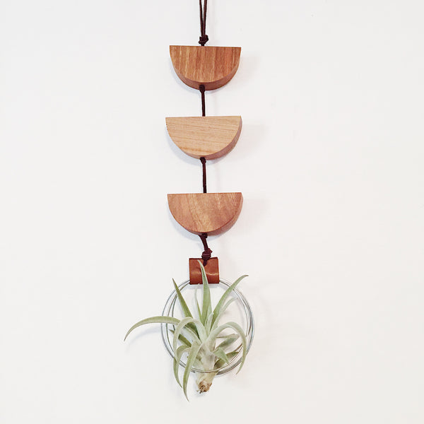 Modern Air Plant Wall Hanging - Urma Minor