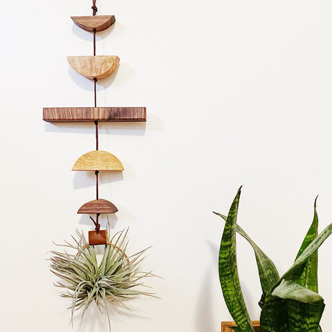 Modern Air Plant Wall Hanging no.36