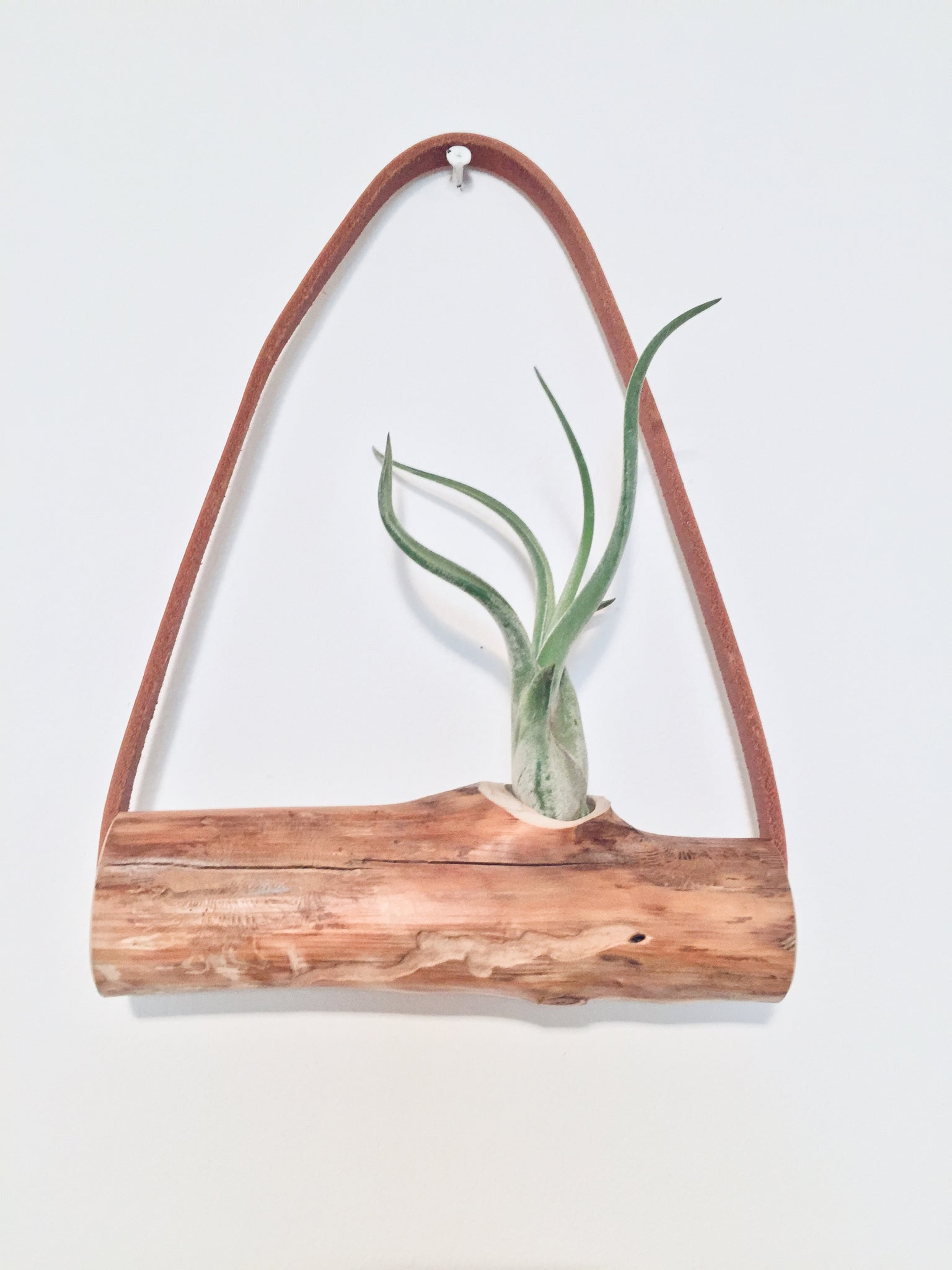 Cedar Branch Air Plant Wall Hanging