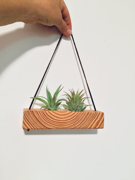 Tree Ring Block Air Plant Wall Hanging