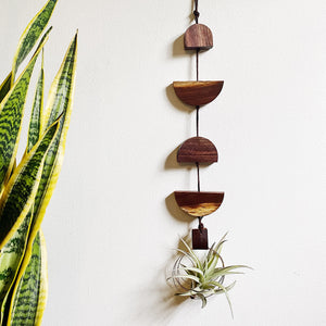 Modern Air Plant Wall Hanging no.44