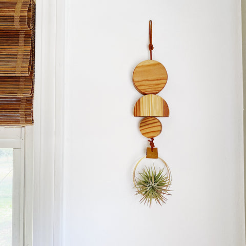 Air Plant Wall Hanging no.60