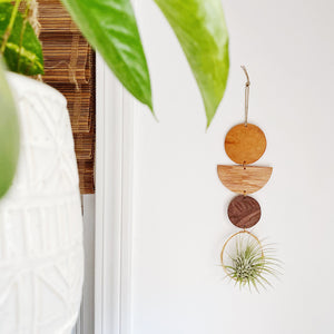 Air Plant Wall Jewelry no.063