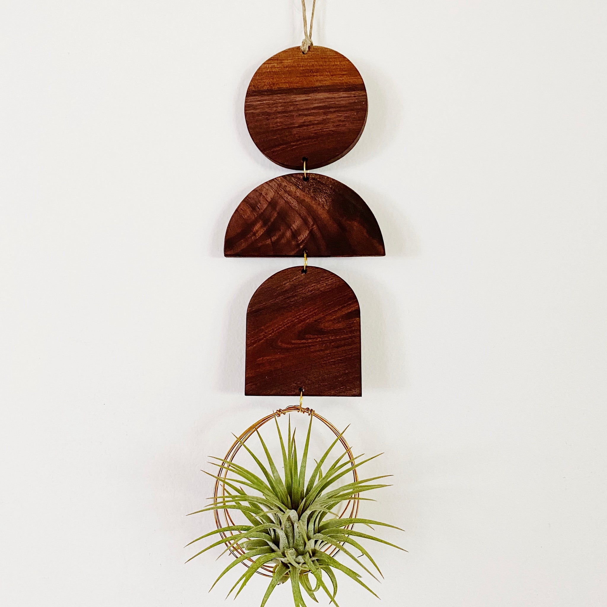 Air Plant Wall Jewelry - Indie