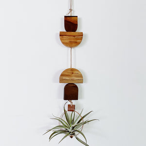 Air Plant Wall Hanging no.48