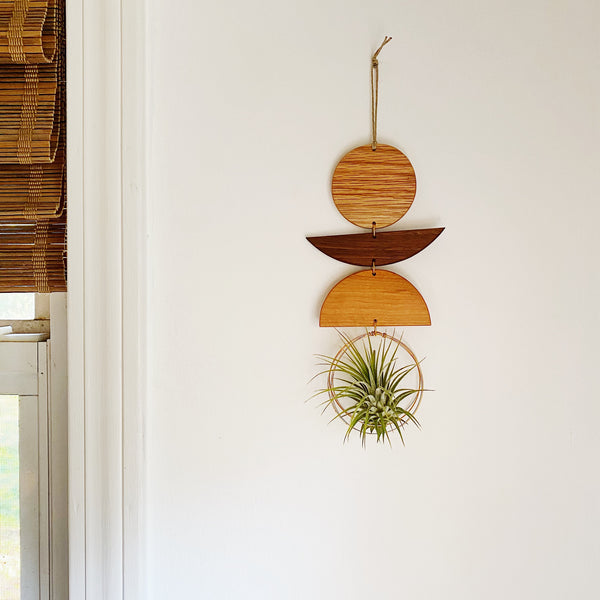 Air Plant Wall Jewelry no.066
