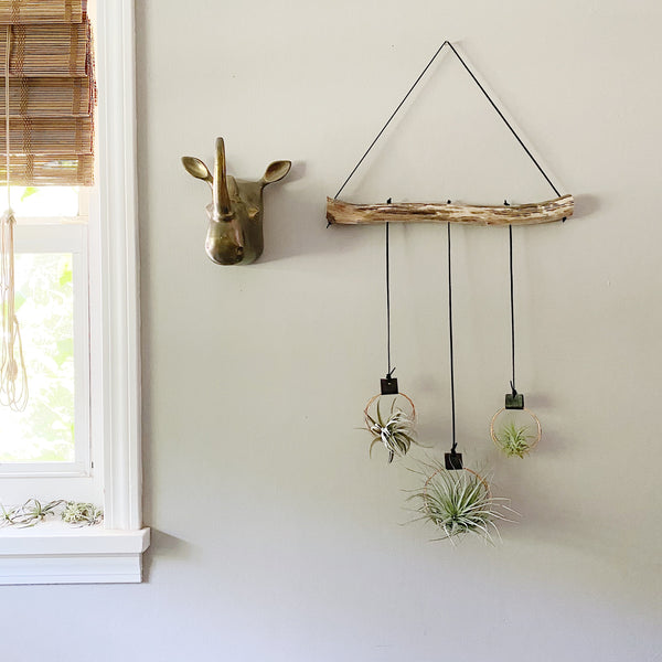 Branchin' Out - Triple Air Plant Wall Hanging vol 1 | Black