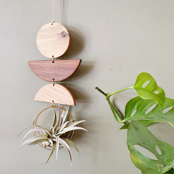 Air Plant Wall Jewelry no.096
