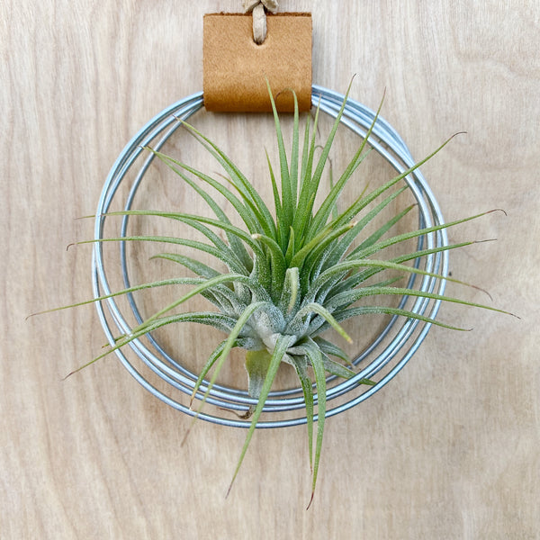 Modern Southwest Air Plant Wall Hanging no.47