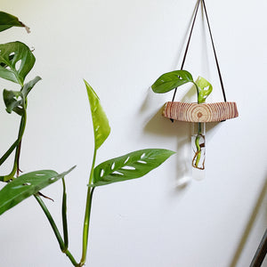 Plant Propagation - Hanging Wood Propagation Vase | Pine