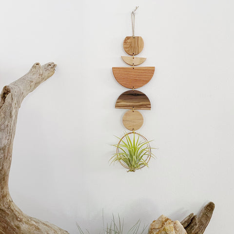 Air Plant Wall Jewelry no.084