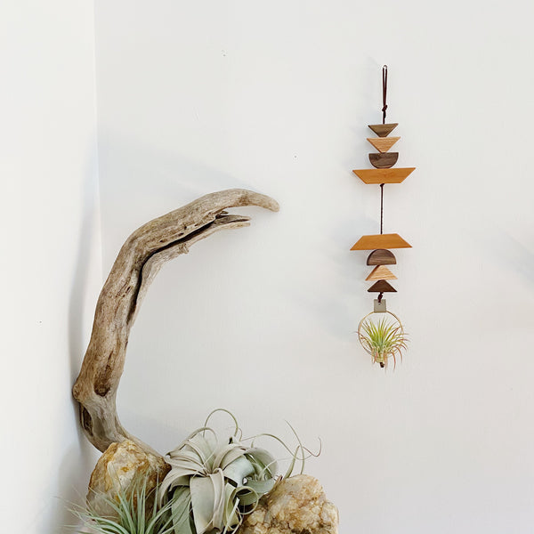Modern Southwest Air Plant Wall Hanging no.67