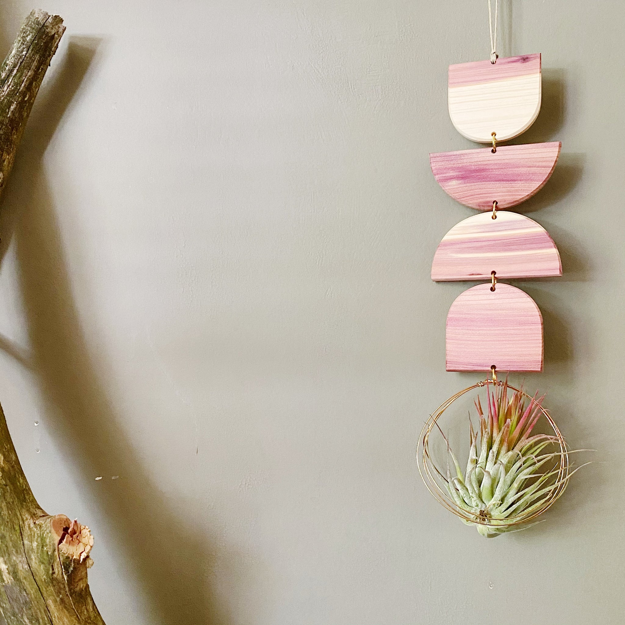 Air Plant Wall Jewelry no.085