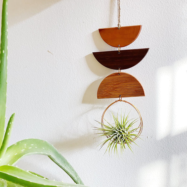 Air Plant Wall Jewelry no.067