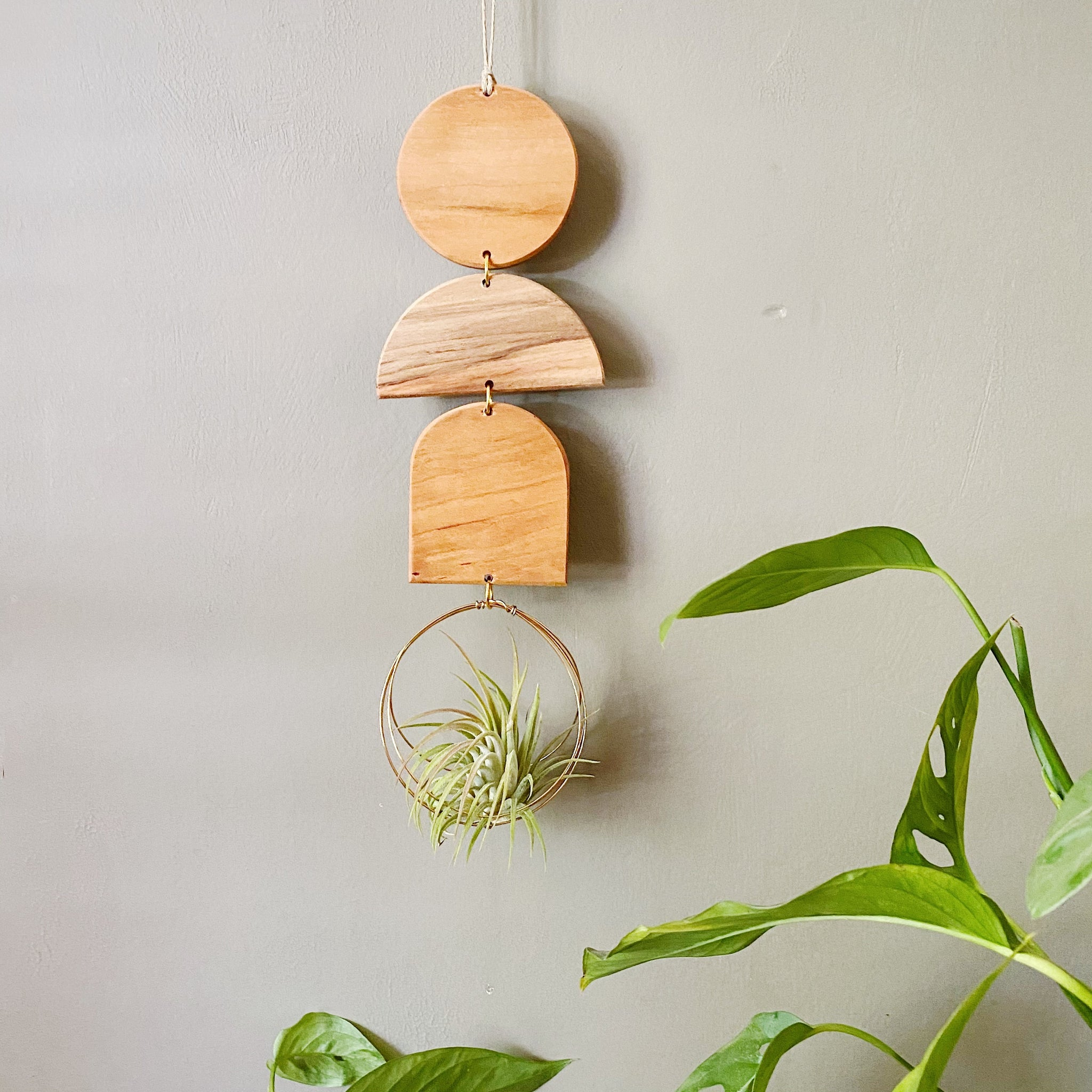 Air Plant Wall Jewelry no.093