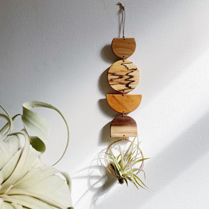 Air Plant Wall Jewelry no.098