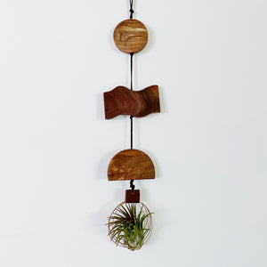 Air Plant Wall Hanging - the Sun, the Water, the Earth