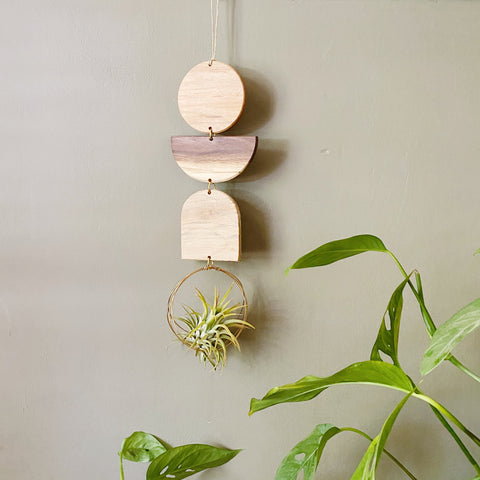 Air Plant Wall Jewelry no.092