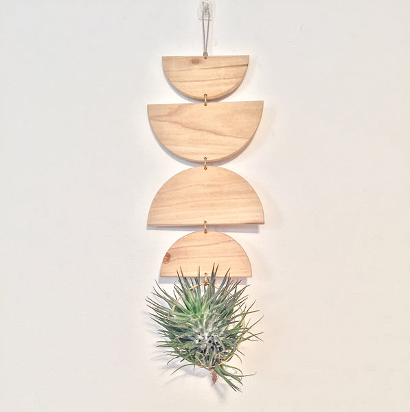 Modern Air Plant Wall Hanging - Honey