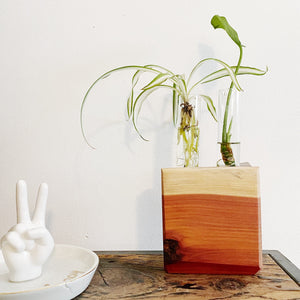 Plant Propagation Vase Live Edge Block no. 2 - Cedar