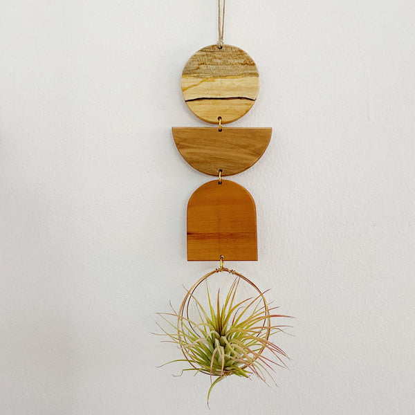 Air Plant Wall Jewelry no.091