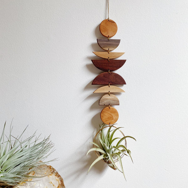 Air Plant Wall Jewelry no.088