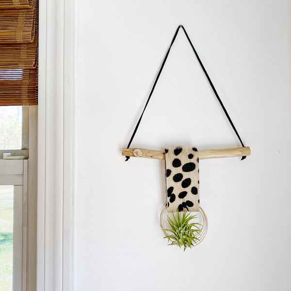Floating Ring Air Plant Wall Hanging - Single