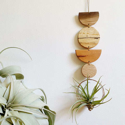 Air Plant Wall Jewelry no.086