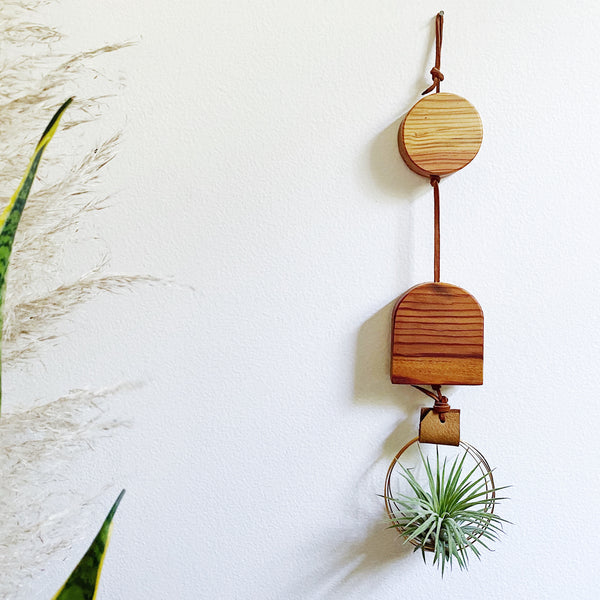 Wildly Air Plant Wall Hanging no.54