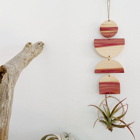 Air Plant Wall Jewelry no.089