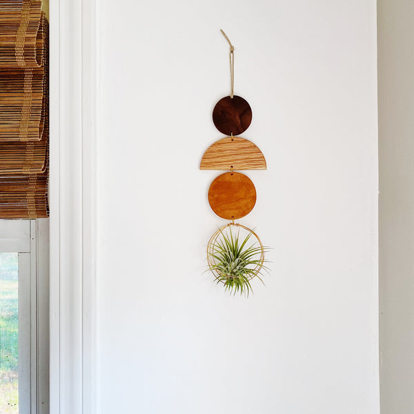 Air Plant Wall Jewelry no.062