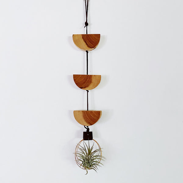 Air Plant Wall Hanging no.51