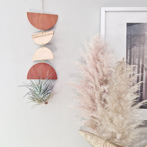 Modern Air Plant Wall Hanging - Half and Half