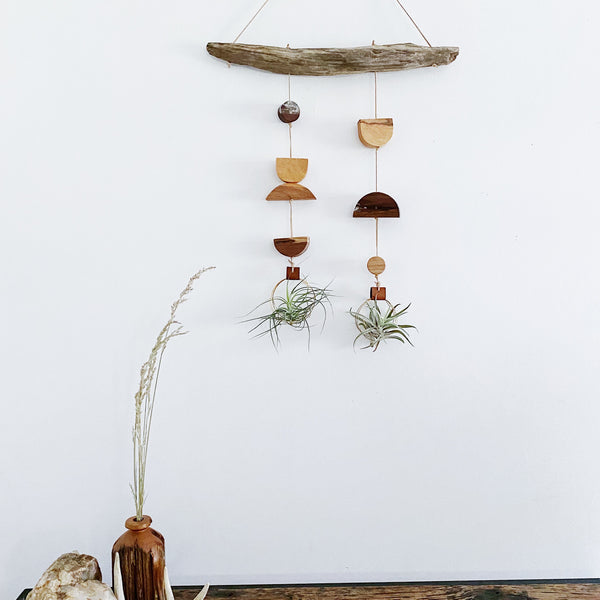 Wildly Air Plant Wall Hanging no.58