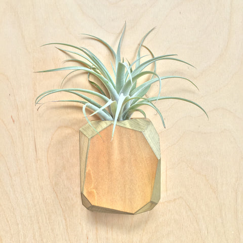 Gem Air Plant Holder - Large