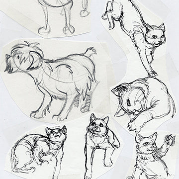 Animal Drawing Part 1