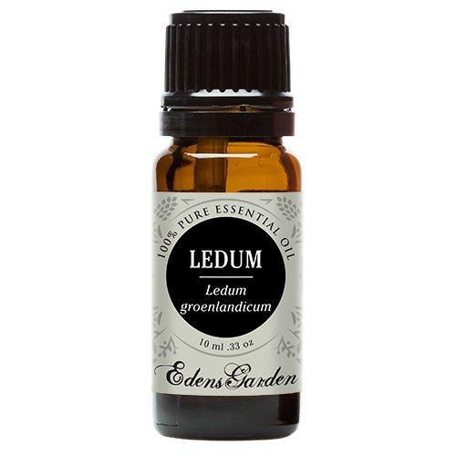 Ledum  Essential Oil 10ml - OilyPod