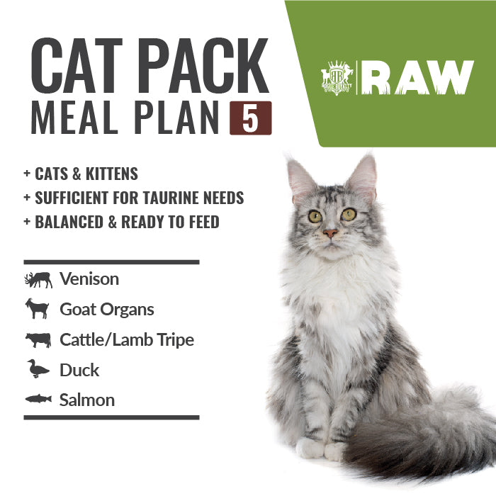 MEAL PLAN - CATS & KITTENS #5