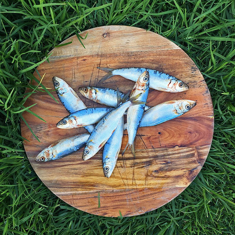 Natural sardines for raw diet for dogs and cats. Available 10 per pack