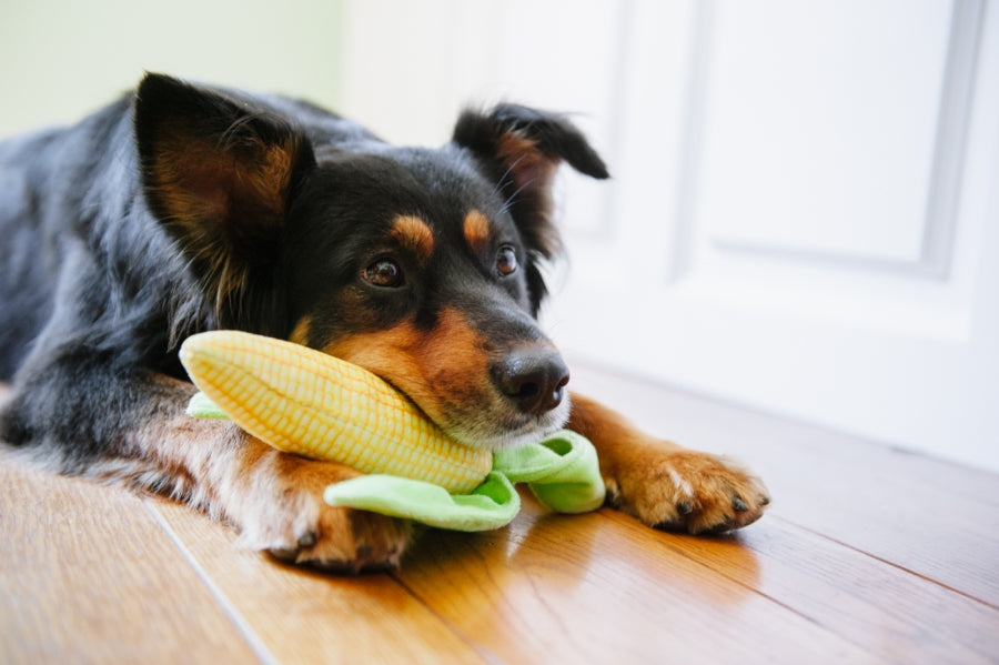 Corn Plush Dog Toy