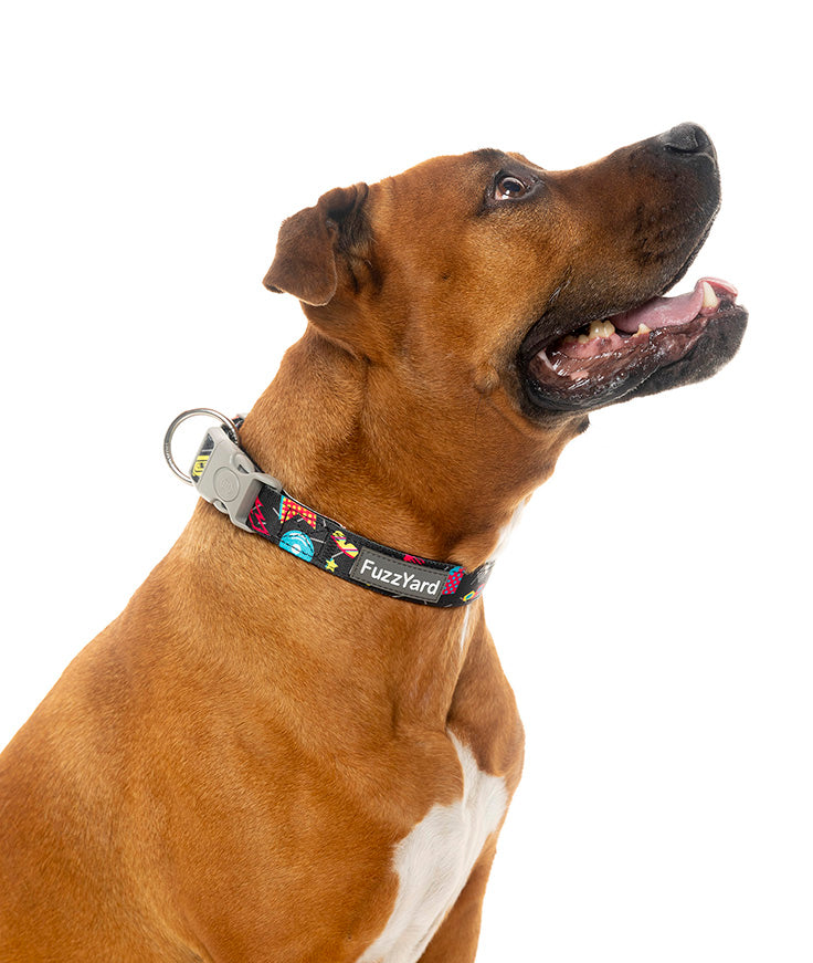 Bel Air Dog Collar