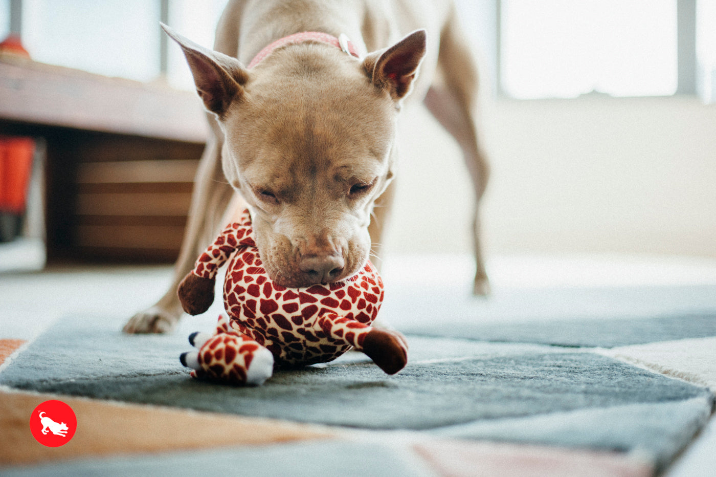 Giraffe Plush Dog Toy
