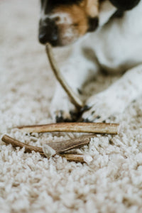 Dog and antlers on carpet