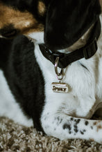 Name tag attached to dog's collar