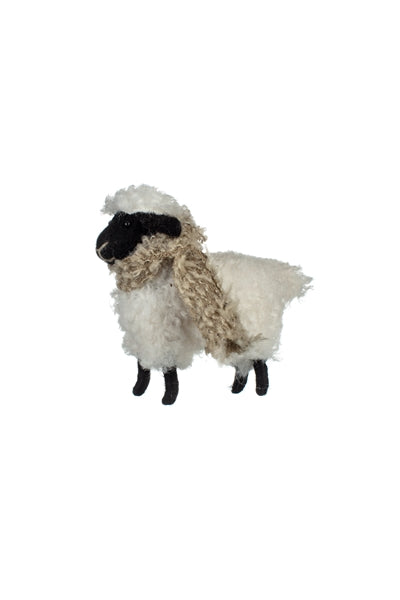 Suffolk Sheep with Scarf